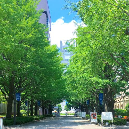 青山 学院 大学